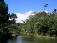 foto z NP Andasibe