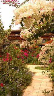 zahrada hotelu Decameron Baobab