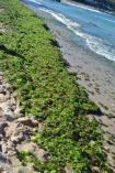 nešťastná pláž