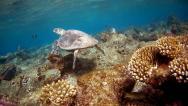 želva na útesu