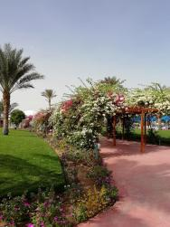 zahrada v komplexu hotelu