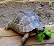 Želvička, žijící v hotelové zahradě.